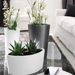 pot plante intérieur