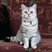 chat whiskas