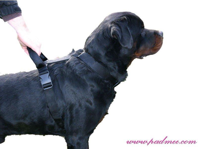 harnais pour gros chien
