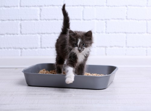 littiere chat