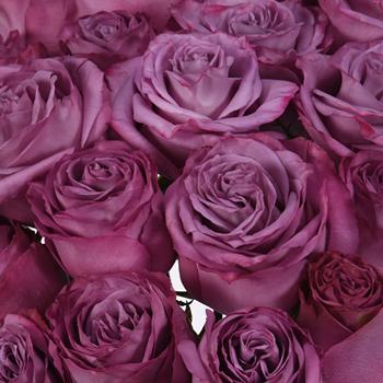 mauve rosé