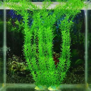 plante d aquarium