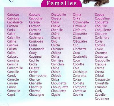 prenom pour chat