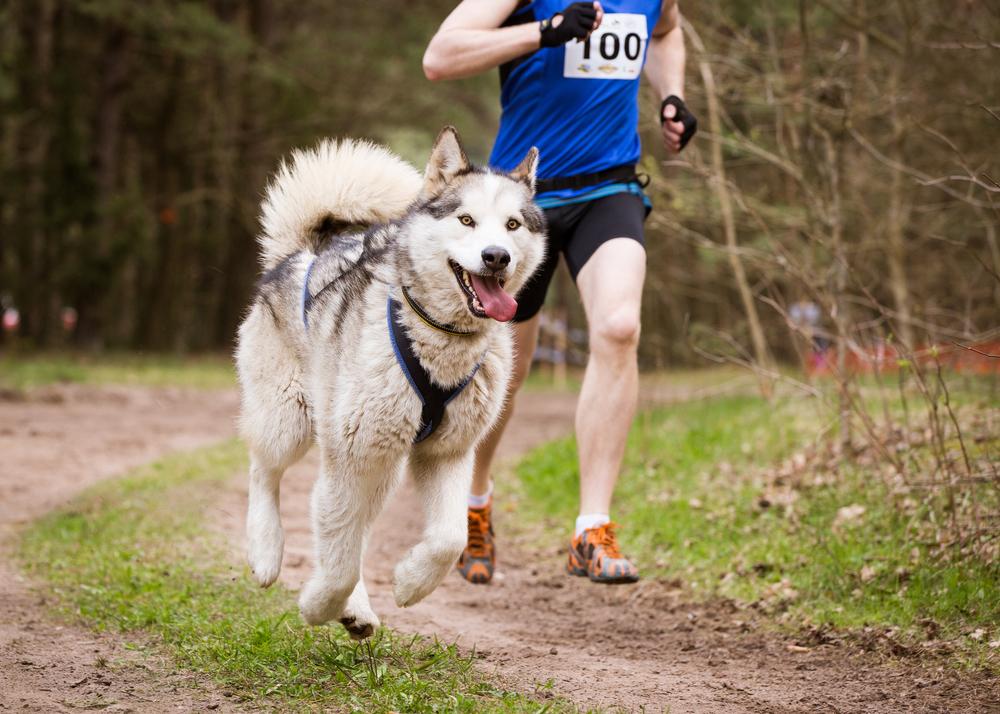 sport canin